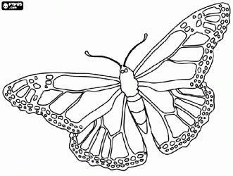 Monarch Wings Costume - Meningrey