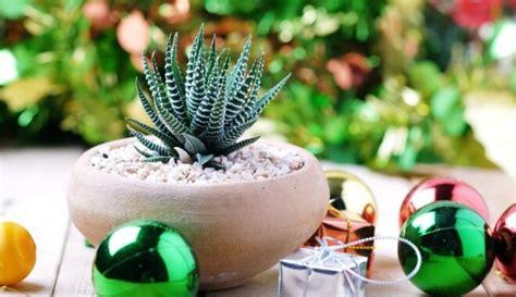 Sanpaulija, līdakaste, kaktusi un citi telpaugi, kas ...