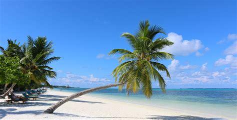 chaise d ecole maldives meedhoo canareef resort maldives 4 plage