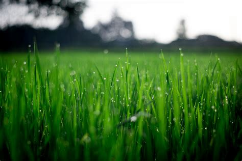 Image result for green lawn
