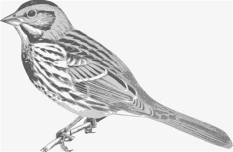 sparrow clipart black and white clipart sparrow