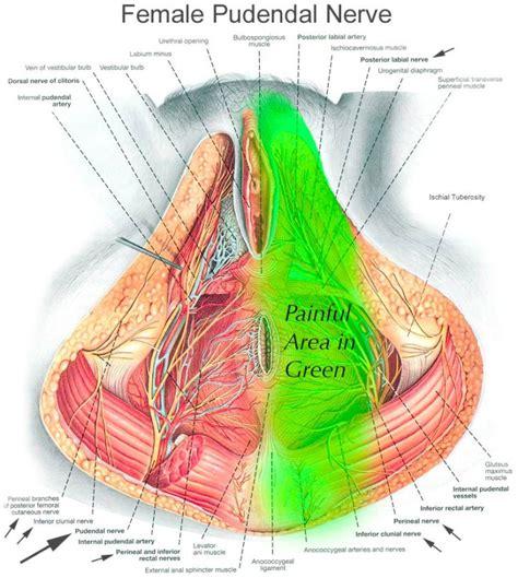 pelvic floor myalgia levator ani spasm do you what is pudendal neuralgia my gynae