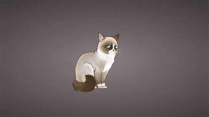 Cat Meme 4k Grumpy Uhd Wallpapers Backgrounds