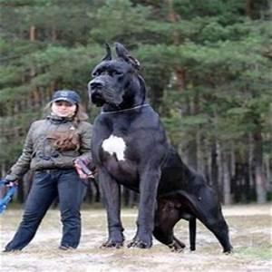 15 Biggest Animals In The World - Booboone.com