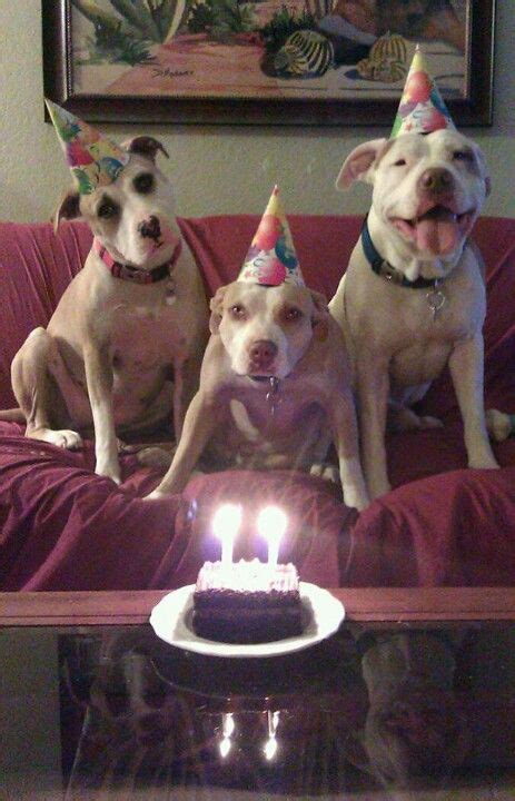 ideas  happy birthday puppy  pinterest cool