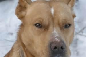 Dog Mange Treatment