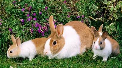 Rabbit Bunny Desktop Computer Wallpapers Rabbits Backgrounds