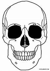 Skeleton Coloring Head Pages Anatomy Printable Pirate Drawing Cool2bkids Dog Getdrawings sketch template