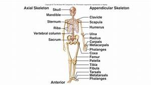 Every Bone In The Body Labeled Human Skeleton1