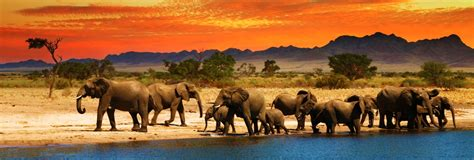Africa A Land Where Wildlife Reigns Supreme  Fun For