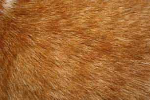 orange tabby cat fur texture picture free photograph
