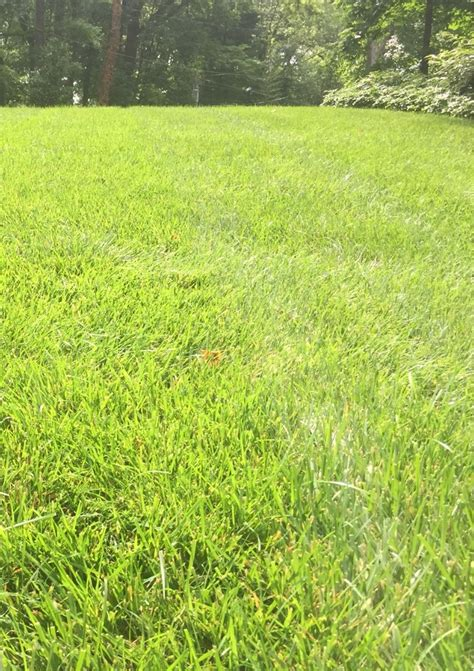 seeding a lawn benefits of over seeding a tall fescue lawn in midlothian virginia green lawn care company