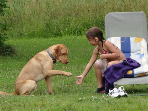 hunde richtig erziehen top  tipps dogs nose hunde