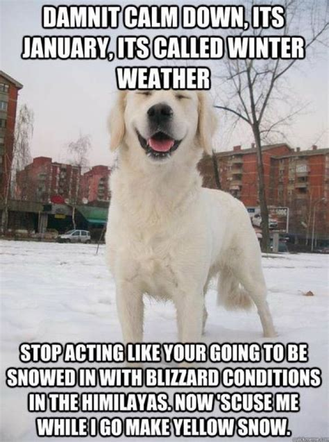 funniest snow memes  cold weather funny cold