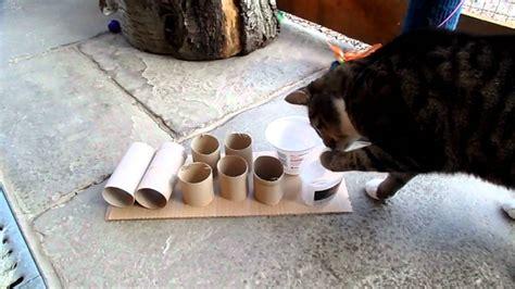 cat  feeder puzzle youtube