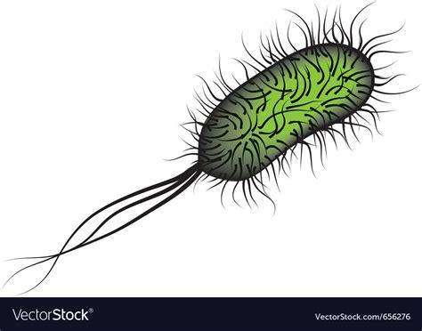 E Coli Bacteria I Royalty Free Vector Image