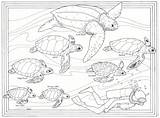 Turtle Coloring Sea Pages Turtles Baby Print Animals Mommy Template Popular sketch template