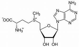 S-Adenosyl methionine - Wikipedia