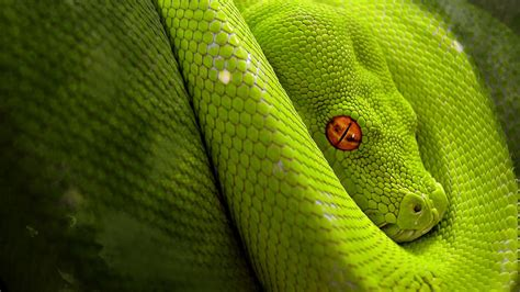 Green Animal Wallpaper - animal green snake up hd wallpaper wallpapers13