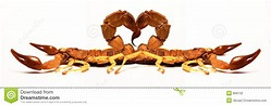 Scorpions in Love stock photo. Image of conceptual, light ...
