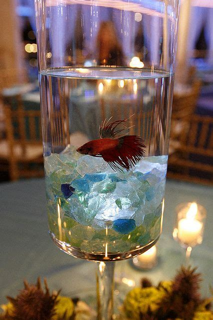 Beach Wedding Centerpiece Betta Fish