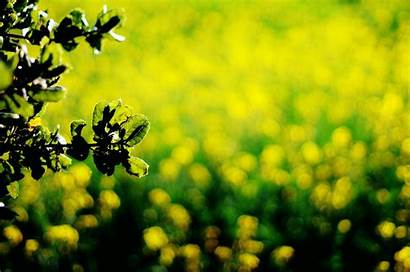 Dark Yellow Background Leaves Screen Wallpapers Widescreen