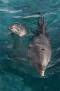 Baby Bottlenose Dolphin Animals