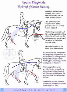 118 Best Horse Anatomy And Physiology Images On Pinterest