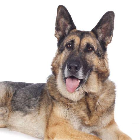 Senior Futter Hunde