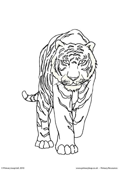 bengal tiger colouring page primaryleapcouk