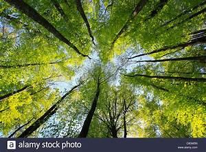 Achat Tronc Arbre Decoratif : arbre tronc feuilles feuilles bois arbres fagus ~ Zukunftsfamilie.com Idées de Décoration