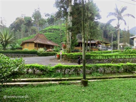 agrowisata gunung mas bogor tempat wisata foto gambar
