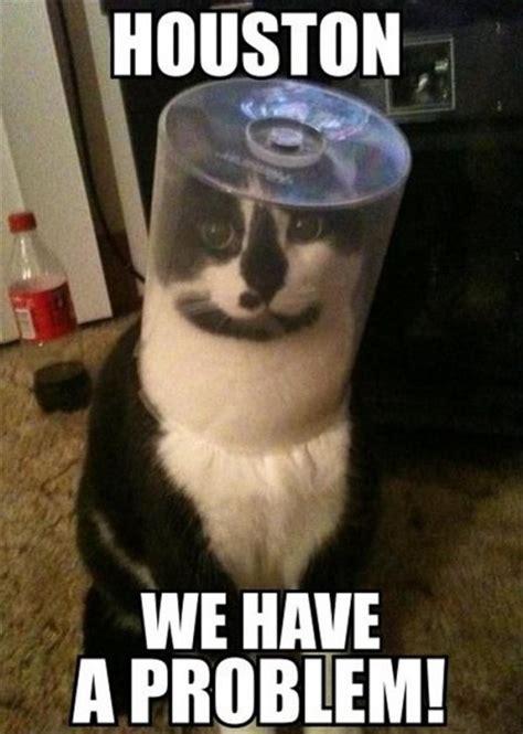 Problem Meme - houston we have a problem dobrador cats