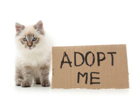 act meow cobb offering  kitten adoptions  june