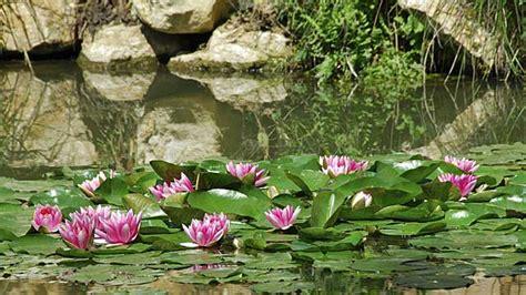 Tipps Für Den Garten by Teichpflanzen F 252 R Den Gartenteich Tipps Zum Bepflanzen