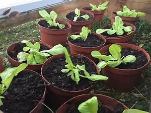 Quel Legume Planter En Septembre : que planter en septembre au potager quels travaux faire ~ Melissatoandfro.com Idées de Décoration