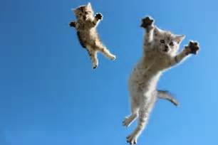 flying with cats flying cat by yurakaprosh on deviantart