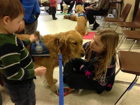 k 9 comfort dogs k 9 parish comfort dogs lend a paw to grieving newtown