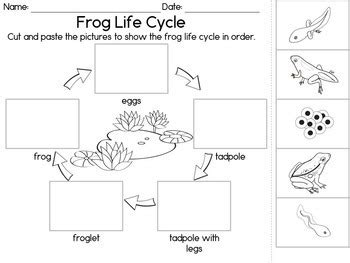 frog life cycle  part cards observation journal