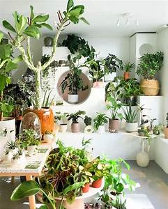 30, Indoor, Decorative, Plants, For, Your, Home