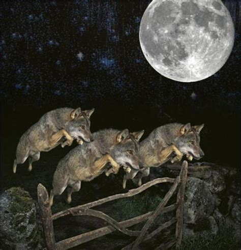 Three Wolf Moon Meme - image 197942 three wolf moon know your meme