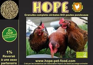 Nourriture Poule Pondeuse Pas Cher : poule pondeuse 85 ~ Melissatoandfro.com Idées de Décoration