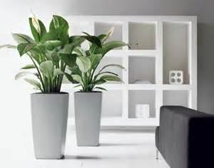 Plantes De Bureau Sans Soleil by Choisir Ses Plantes D Int 233 Rieur En Fonction De La Pi 232 Ce De
