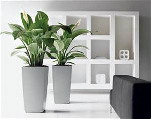 Plante Pour Appartement : choisir ses plantes d 39 int rieur en fonction de la pi ce de ~ Zukunftsfamilie.com Idées de Décoration