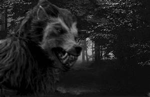 Witness: I Encountered a 6-Foot Dogman in the Forests of ...
