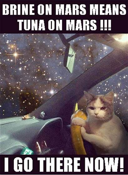 Cat Mars Funny Cats Tuna Casino Driving