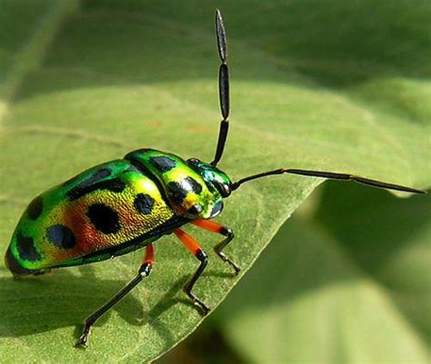 10 Facts About Different Insects  Fact File