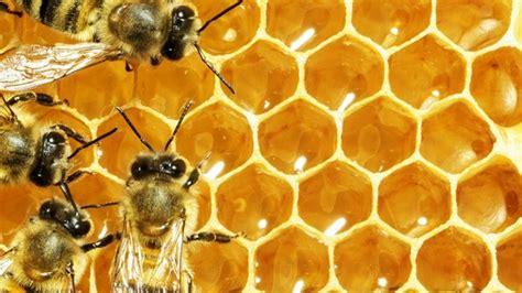 efek  muncul  mengonsumsi sarang lebah secara