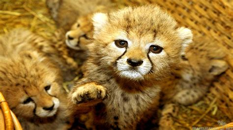 Baby Animal Wallpapers - 30 adorable animal wallpapers