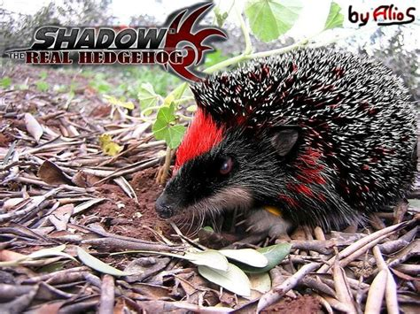 1000 Images About Ultimate Lifeforma Hedgehog On Pinterest